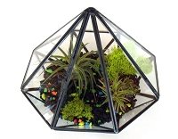 Black Gem Glass terrarium