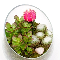Glass Vase Terrarium (12pcs)
